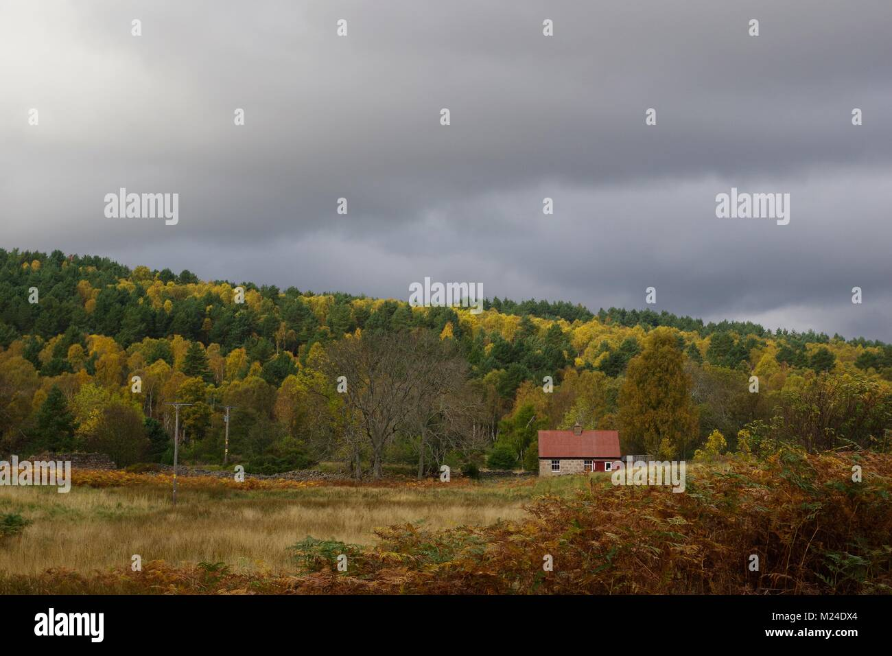 Holiday Cottage at the Foot of the Mixed Autumn Wooded Hillside. Muir of Dinnet NNR, Cairngorms, Scotland, UK. October, - Stock Image