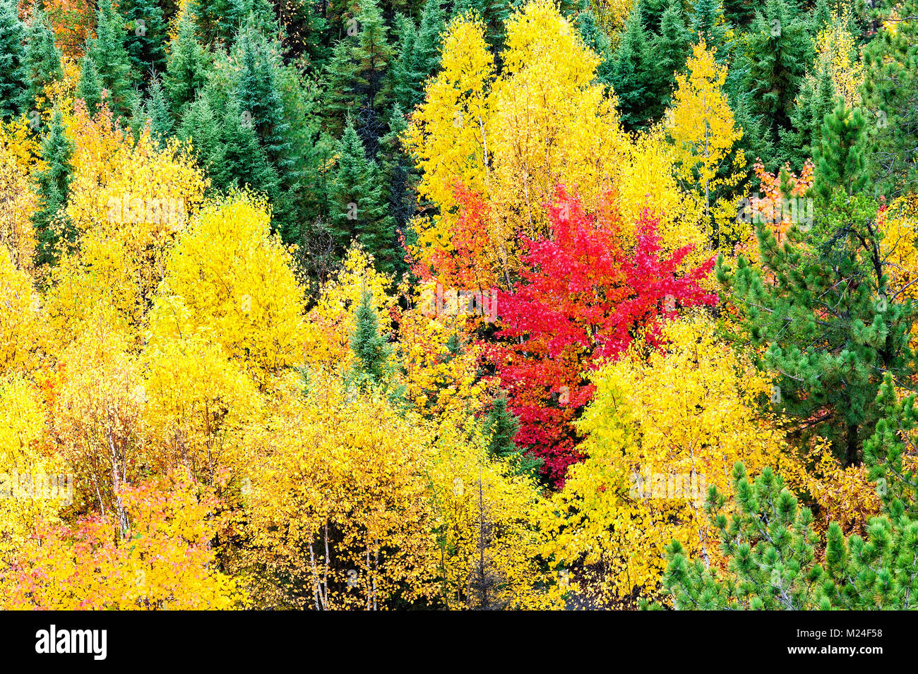 Vivid fall colours in northern ontario Stock Photo