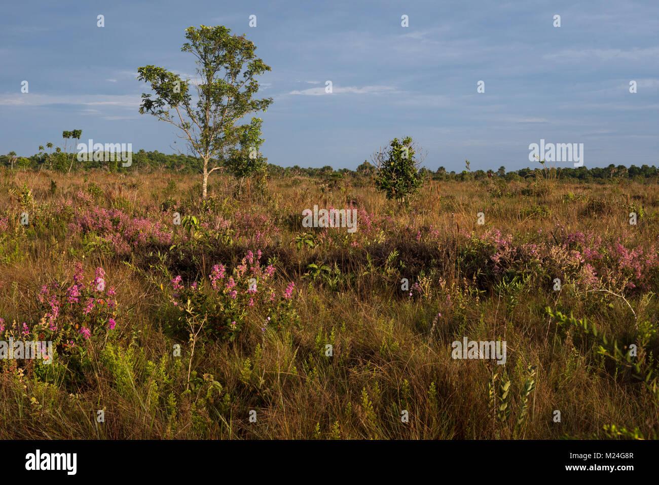 Grassland at Emas National Park, Goiás, Brazil - Stock Image