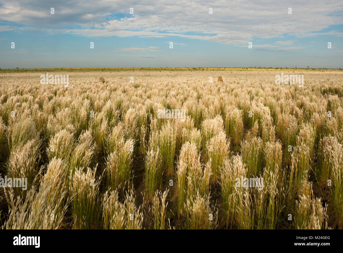 Open grass fields at Emas National Park, GO, Brazil - Stock Image