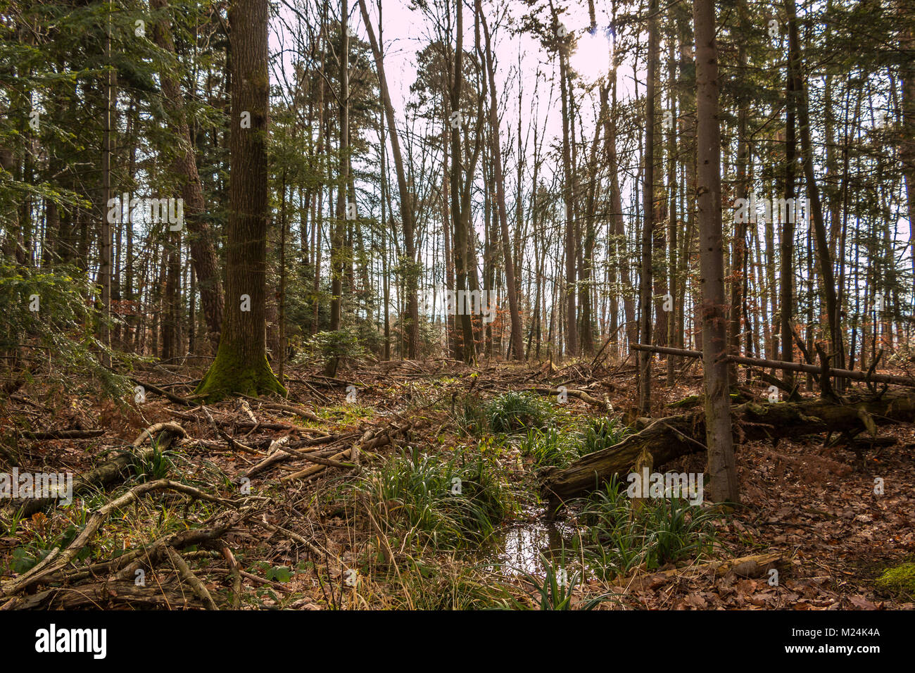 Ground of the forest after a big storm - Stock Image