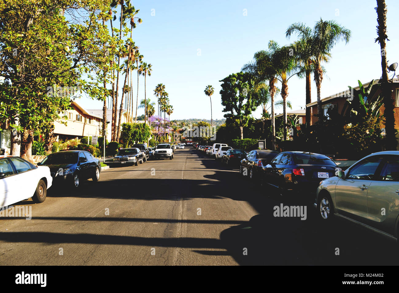 Calm, old school street with cars and palm trees Stock Photo ...
