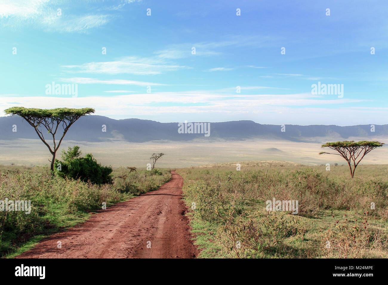 Dirt road between Acacias leading to Ngorongoro Crater, Tanzania - Stock Image