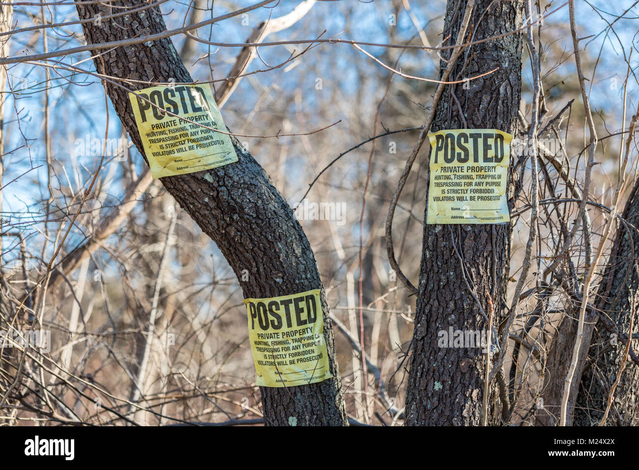 three signs in a tree, posted private property Stock Photo