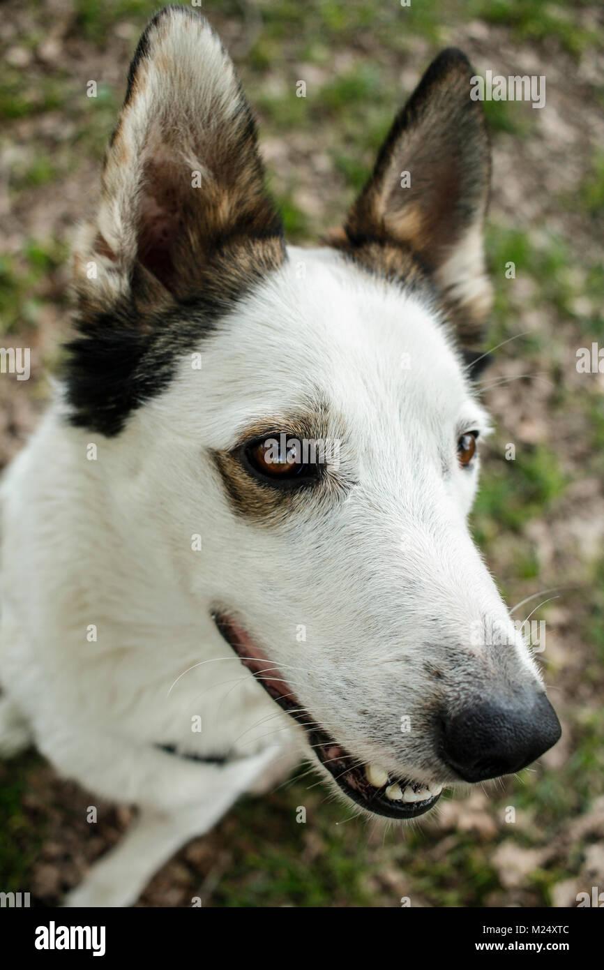 Portrait of a very beautiful non-pedigree dog - Stock Image