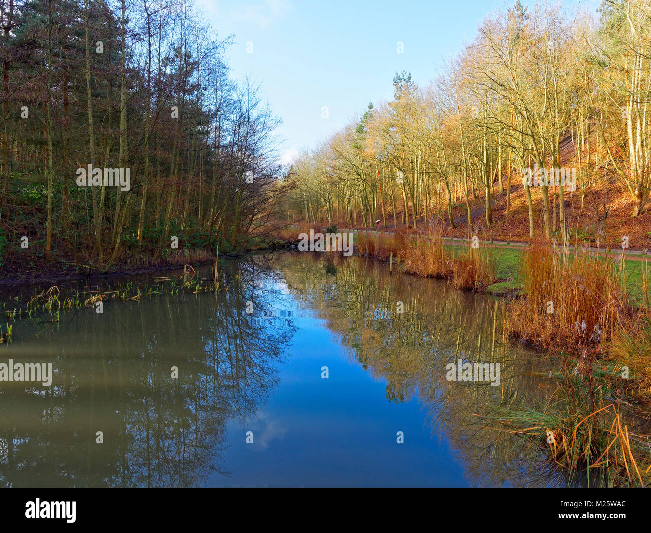 A clear, bright winters day. A small pond, with reeds growing at the waters edge, reflects the winter sky and the Stock Photo