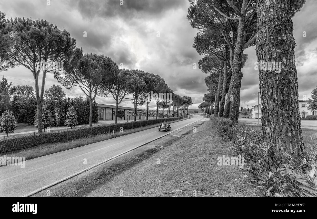 A tree iined road in Tuscany with a single Italian car driving down it.  The huge trees dwarf the small Fiat. - Stock Image
