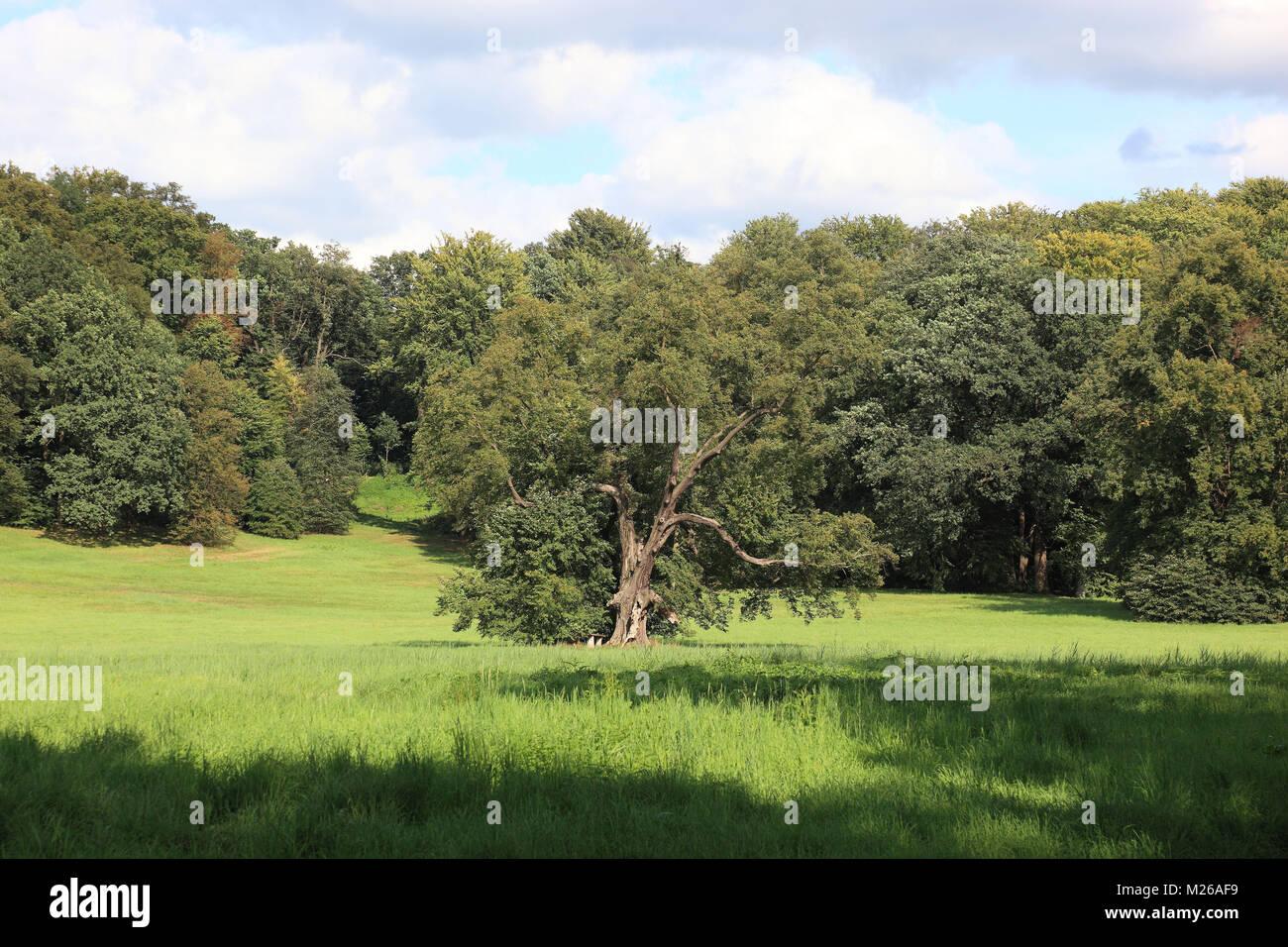 Parkland with tree and forest, Bad Muskau, Landkreis Görlitz, Saxony, Germany, Parklandschaft mit Baum und Wald, Stock Photo