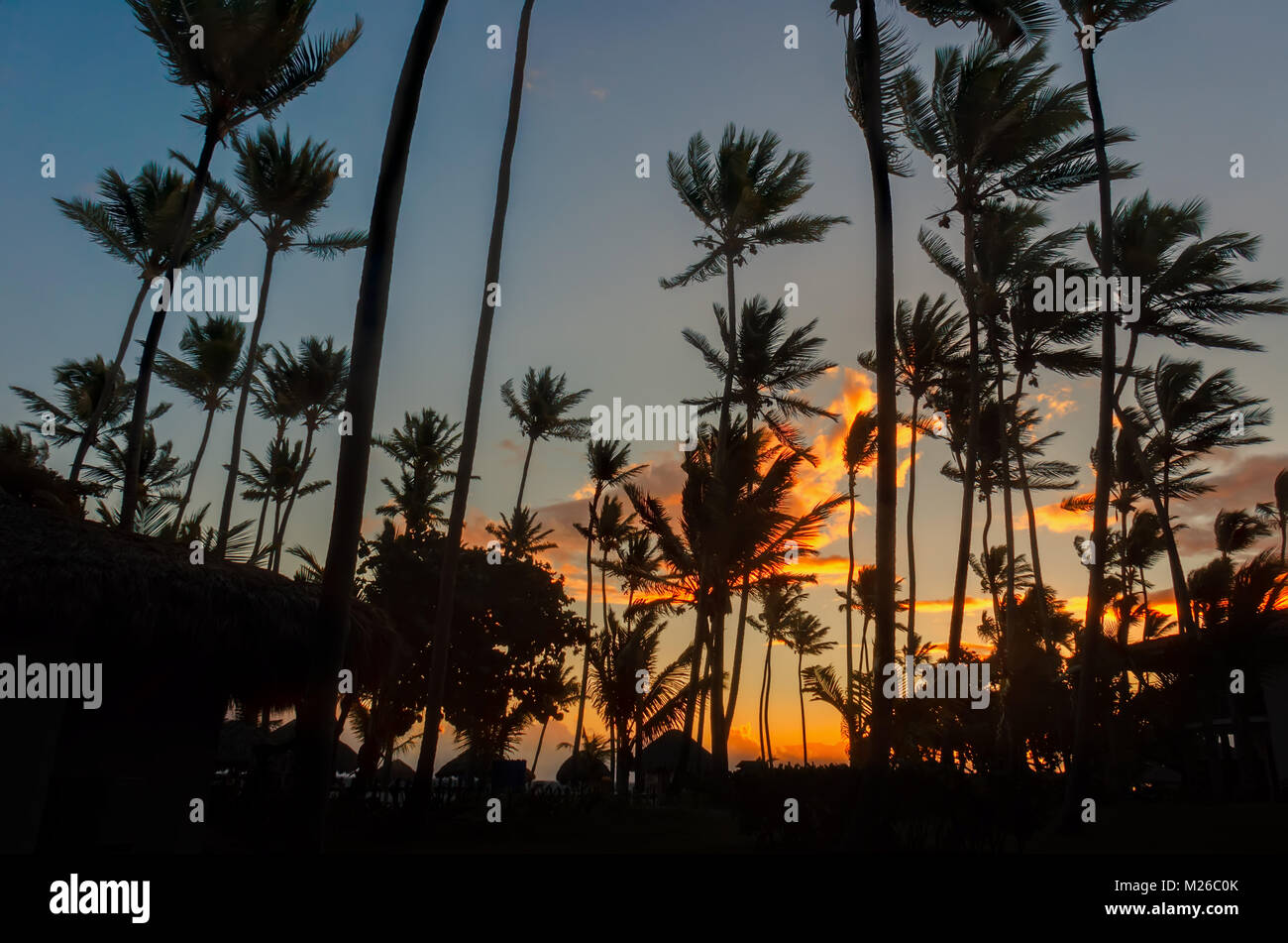 orange clouds and a blue sky in the morning tropical forest with black silhouettes of tall coconut palms and thatched - Stock Image