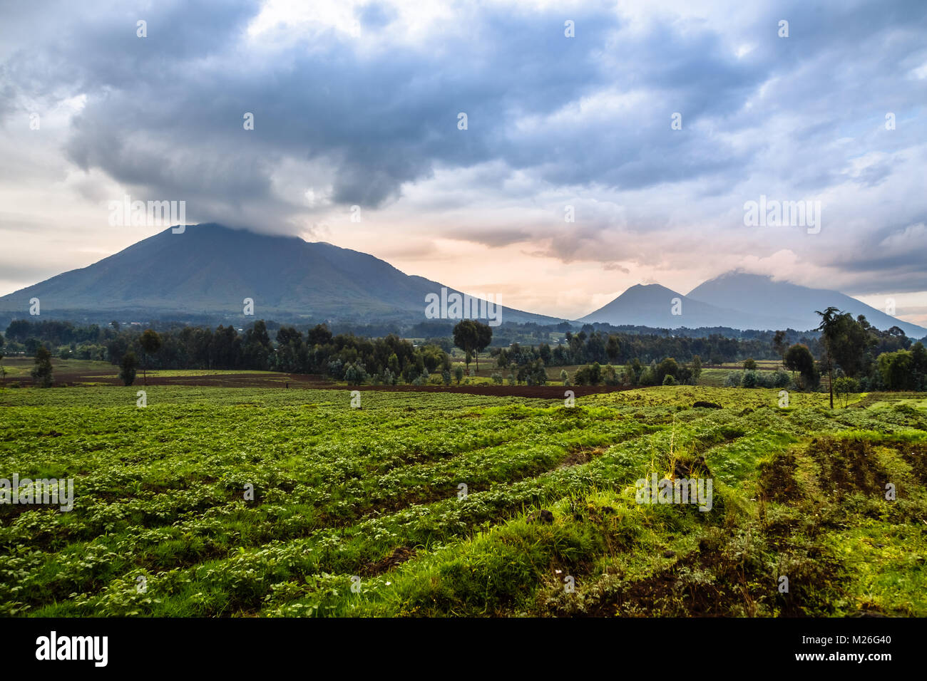 Virunga volcano national park landscape with green farmland fields in the foreground, Rwanda - Stock Image