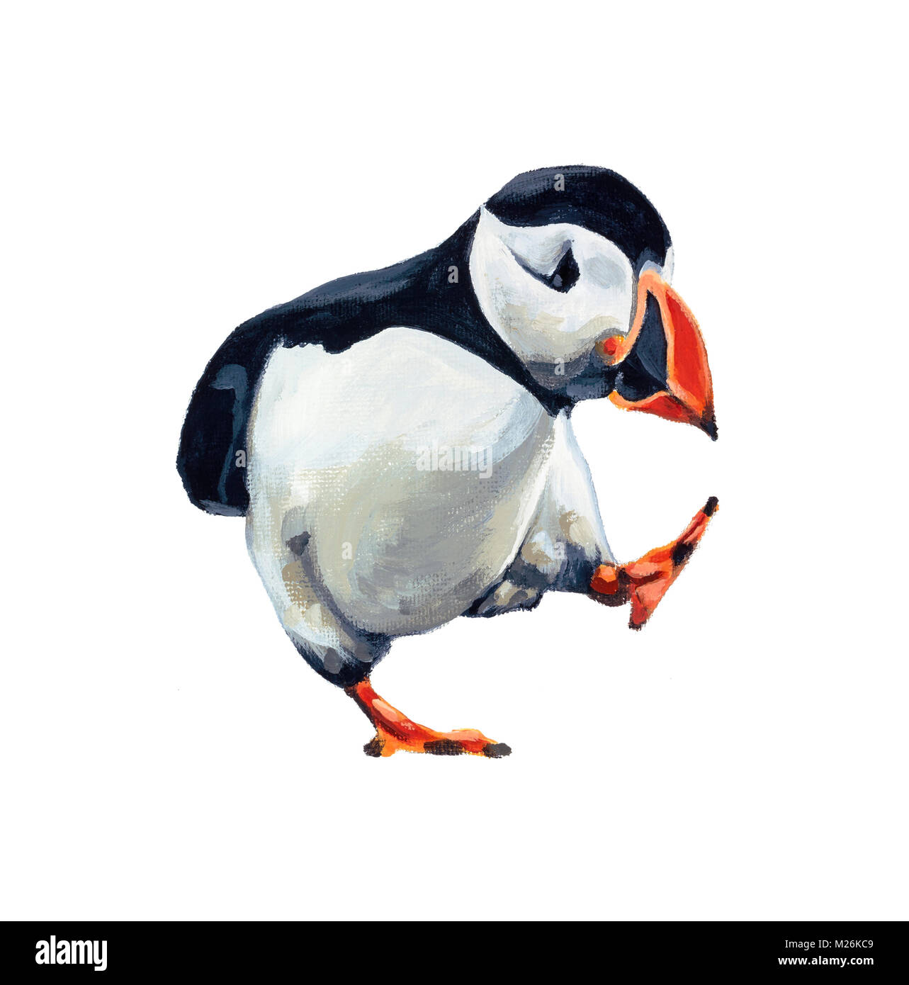 Painting of a single puffin - Stock Image
