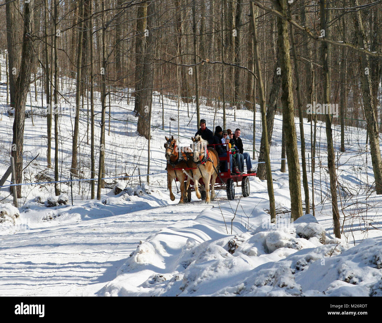 A horse-drawn wagon with families onboard passes through a forest in the winter time. There's snow among the - Stock Image