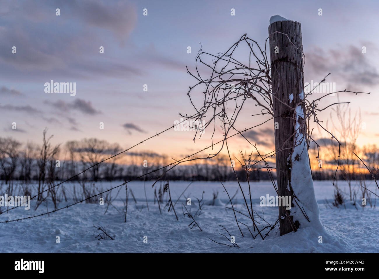 Tangled barbed wire on a fence in Michigan - Stock Image
