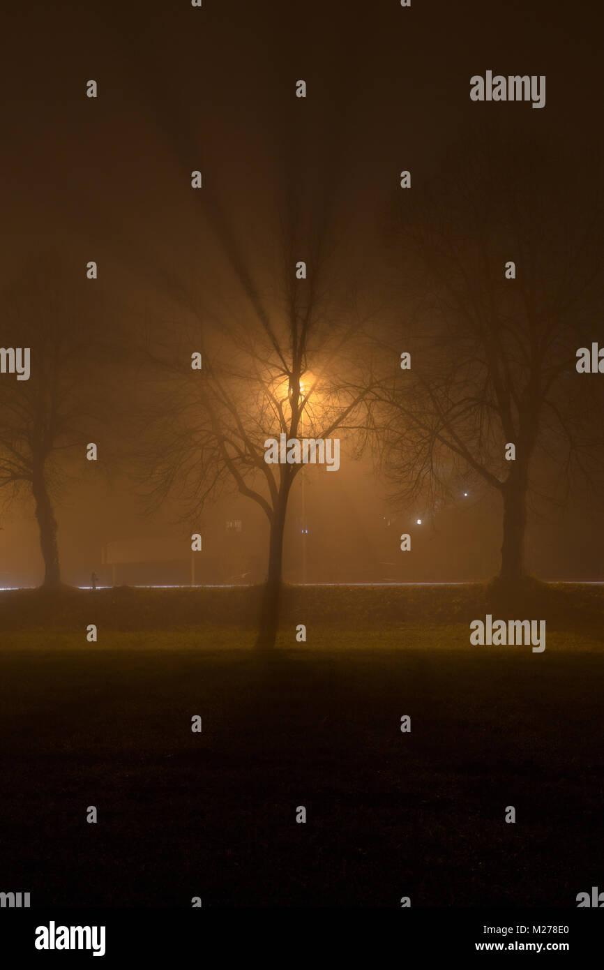 tree in light - Stock Image