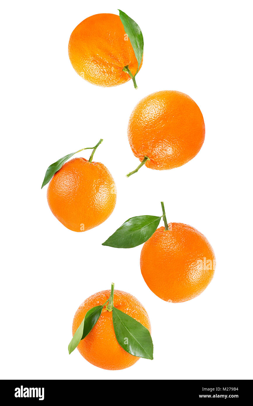 Isolated oranges. Falling whole orange with leaf isolated on white background with clipping path as packaging design - Stock Image