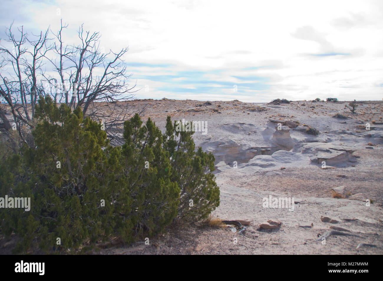 Painted Desert, Petrified Forest National Park in Arizona. - Stock Image