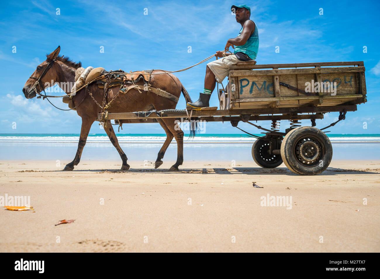 CAIRU, BRAZIL - MARCH 11, 2017: A mule pulls a wooden cart along the shore of a northeastern beach. - Stock Image