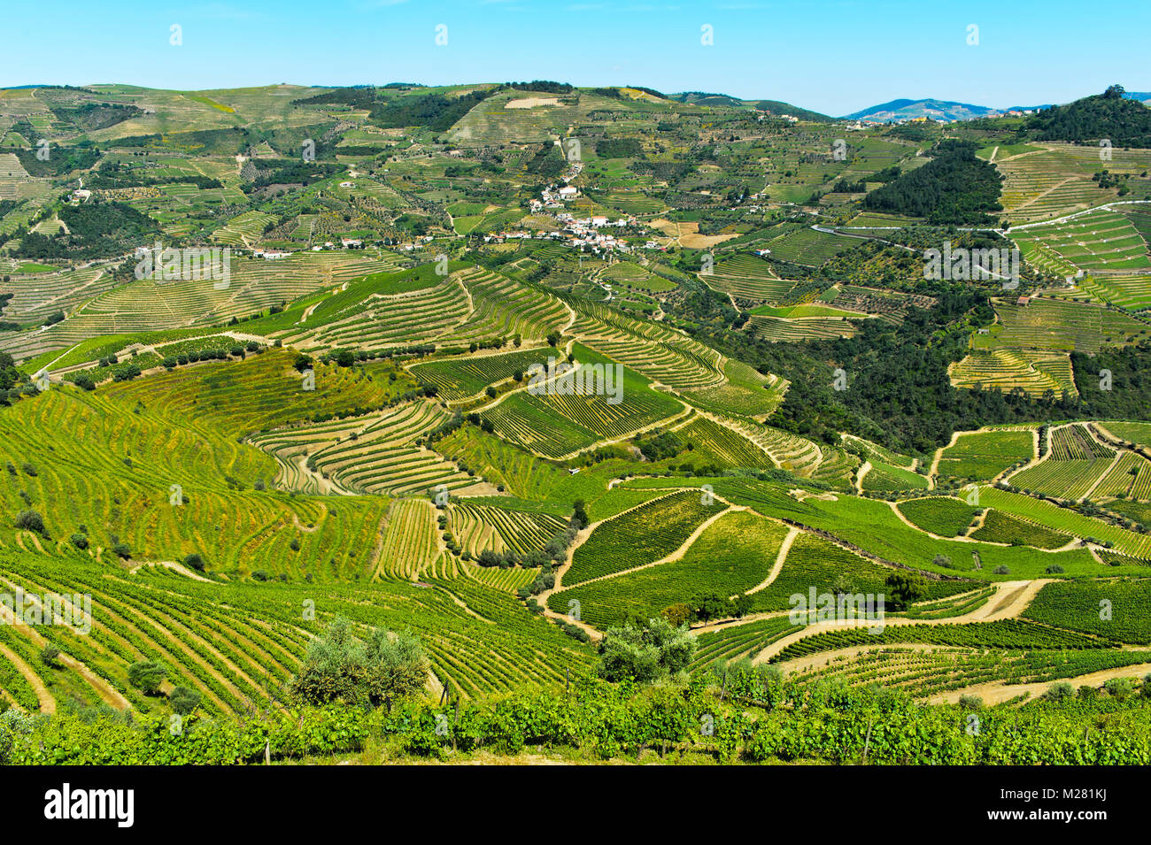 Vineyard region Alto Douro in the valley of the Rio Pinhao, Portugal - Stock Image