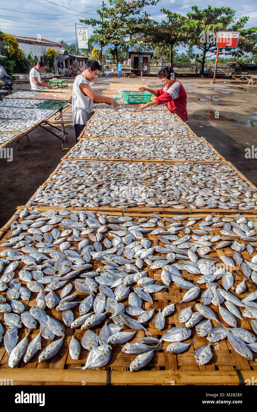 Filipinos work together sun-drying Danggit fish on bamboo racks in Cadiz City, Negros Occidental, Philippines. - Stock Image