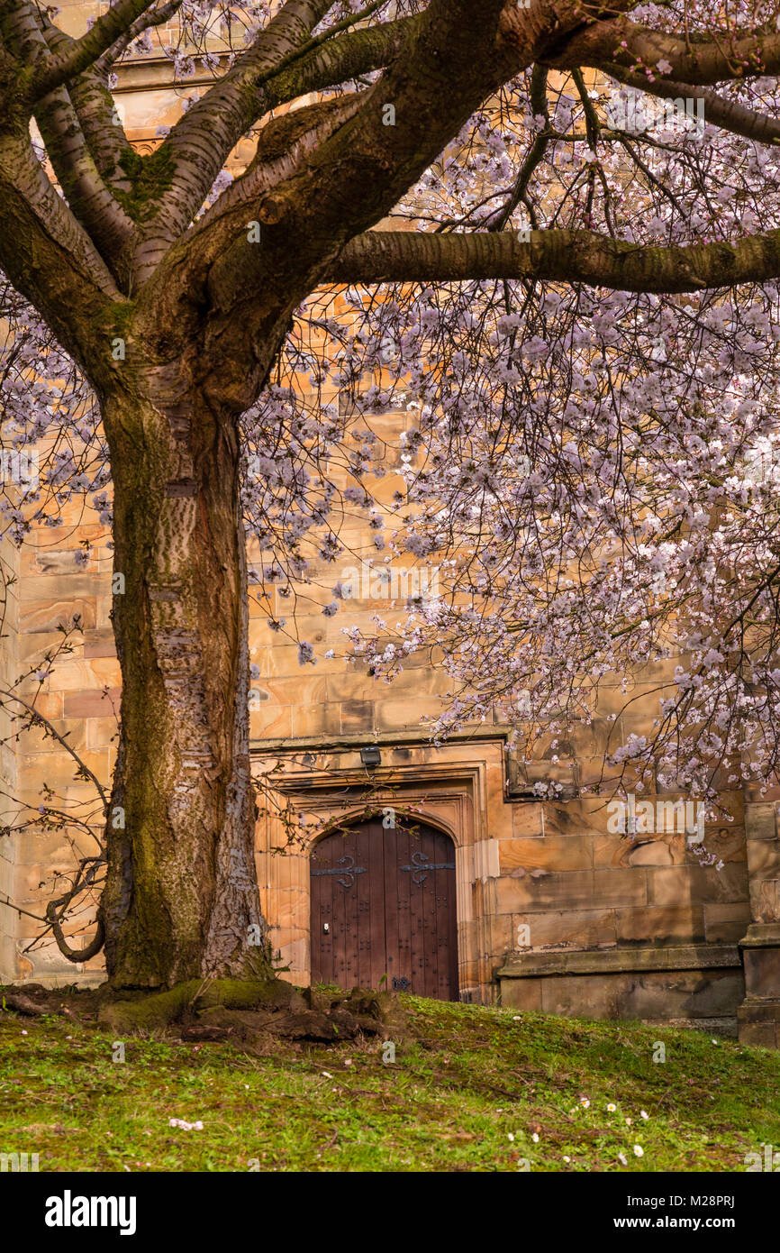 Church door with tree in spring blossom Stock Photo