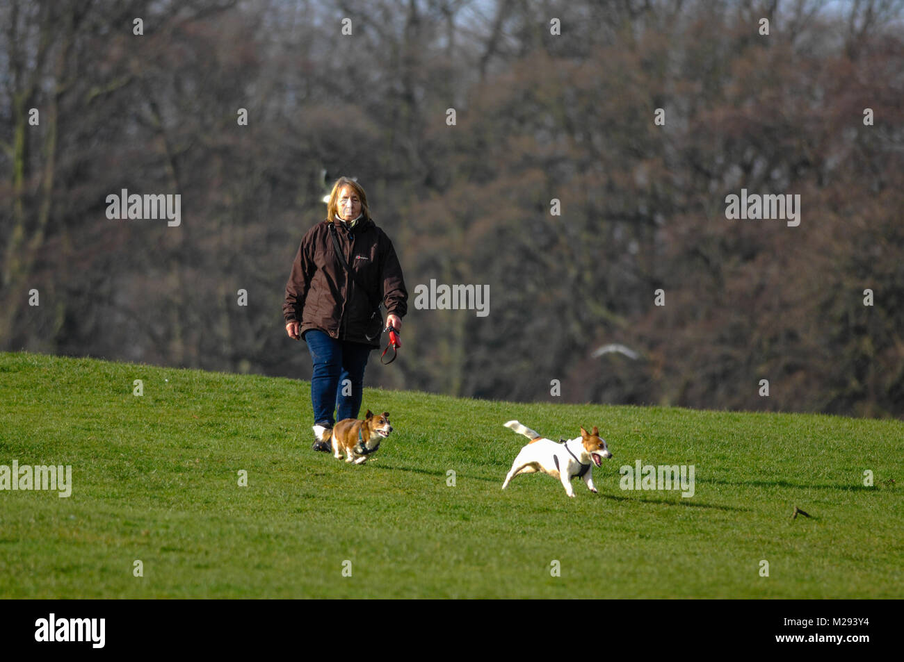 Dog walkers in Abington Park Northampton England UK - Stock Image