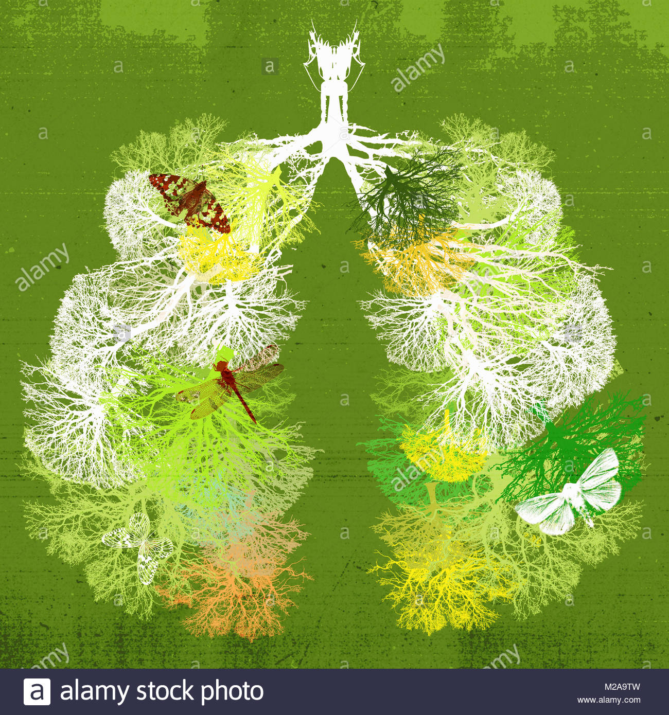 Branches of trees forming healthy lungs - Stock Image