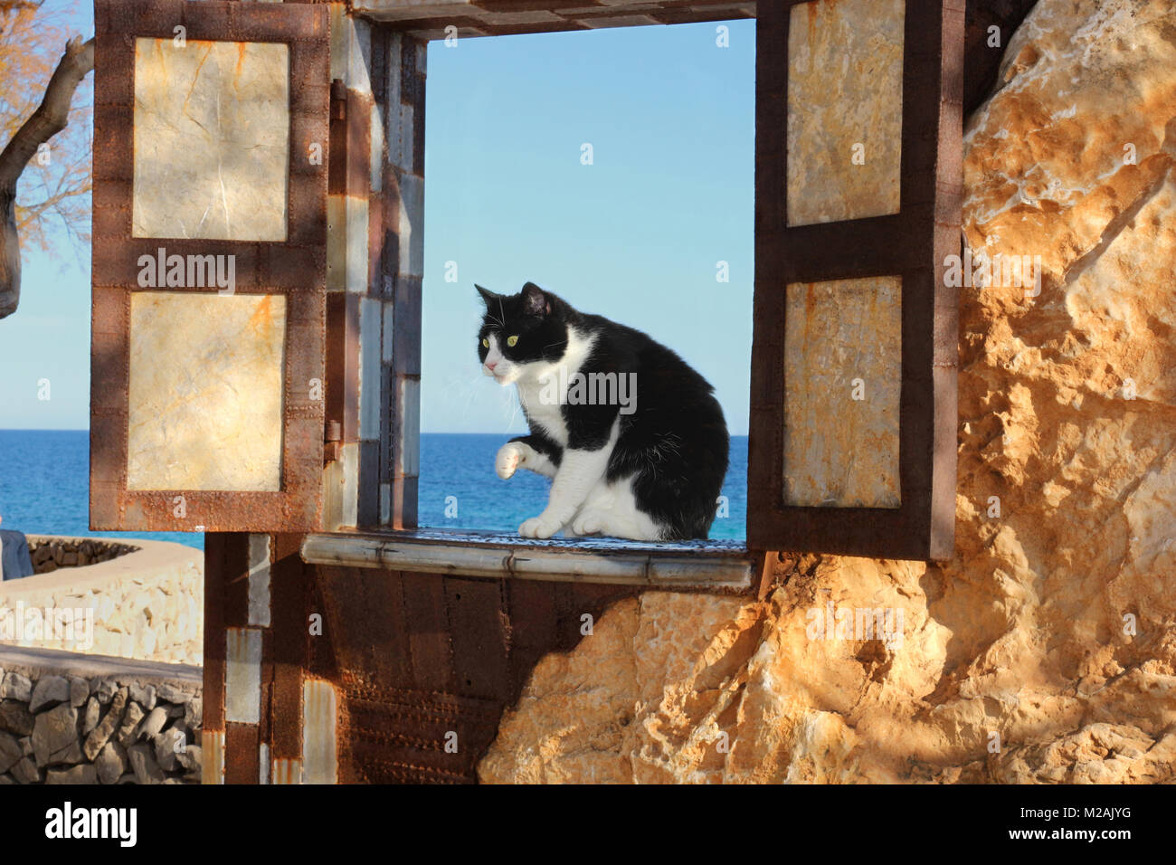domestic cat sitting in a window at the sea - Stock Image