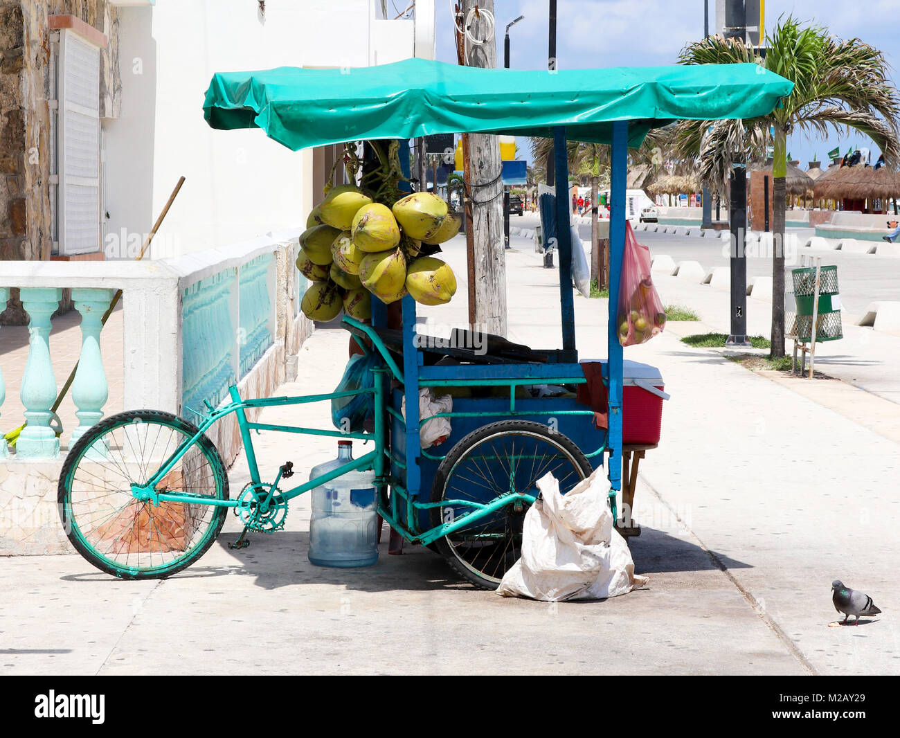 Mexican  3-wheel cargo bike street vendor in Progresso Yucatan with coconuts hanging from it and palm trees in the - Stock Image