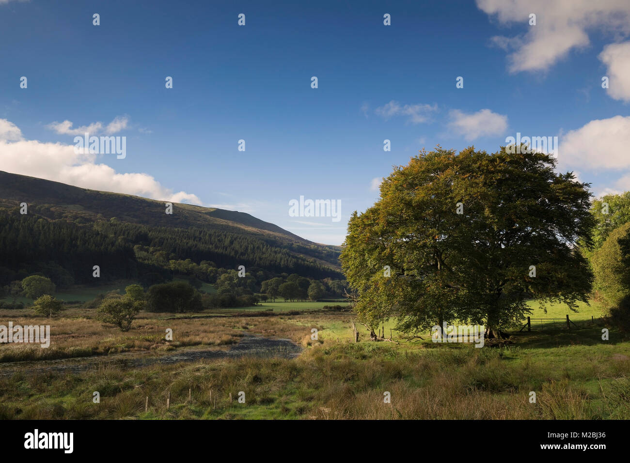 An image of a beautiful Welsh Valley situated at the edge of Talybont Reservoir, Powys, Wales, UK - Stock Image