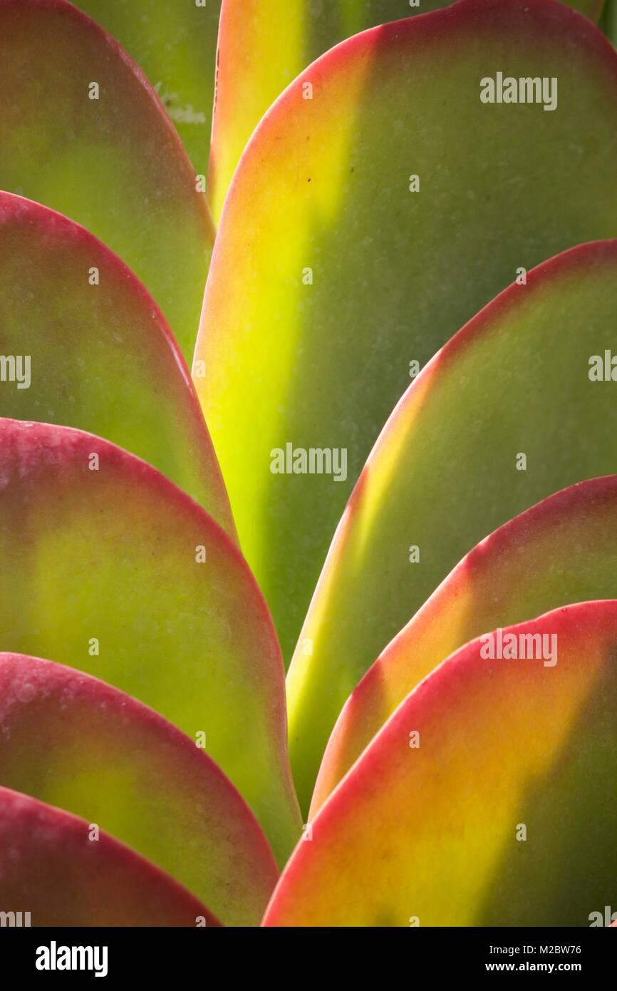 Spirit Plant - Stock Image