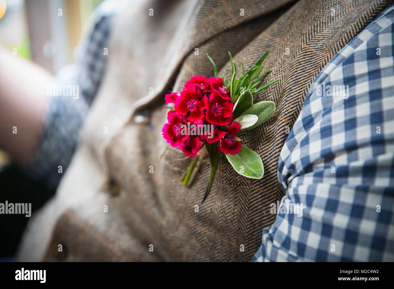 Man wearing herringbone waistcoat, with red boutonniere, mid section, close-up - Stock Image
