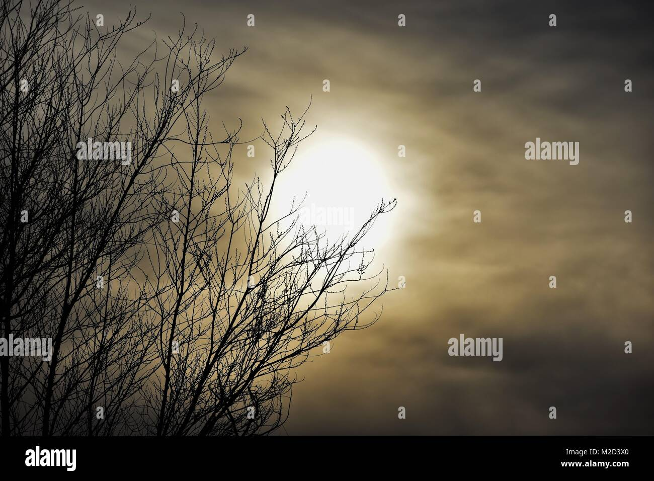 Eerie Sunset With Leafless Tree, Cloudy Sky - Stock Image