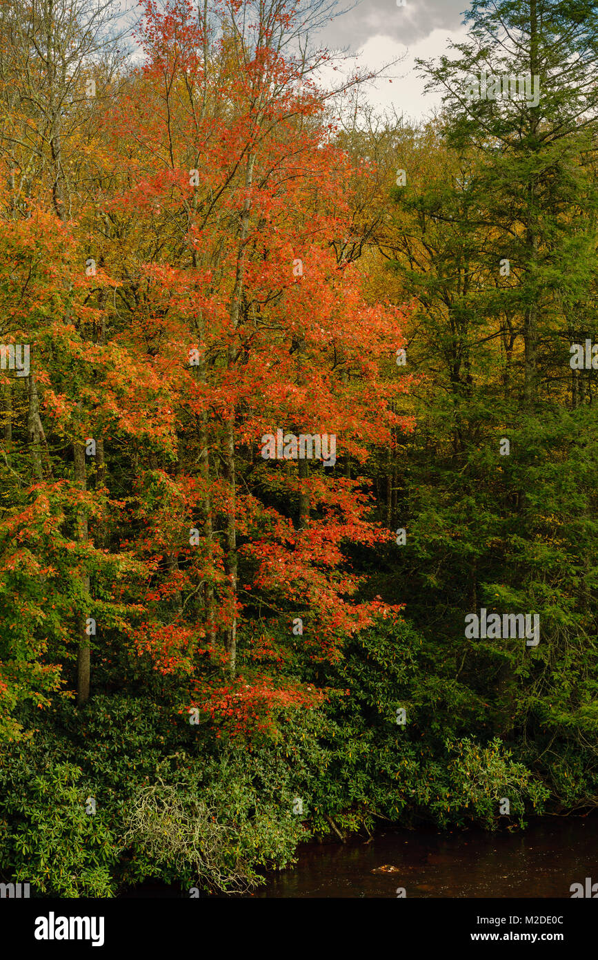 Fall Foliage Blue Ridge Parkway North Carolina - Stock Image