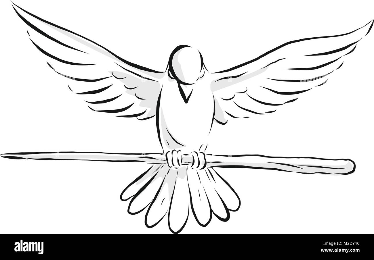 Drawing sketch style illustration of a soaring dove or