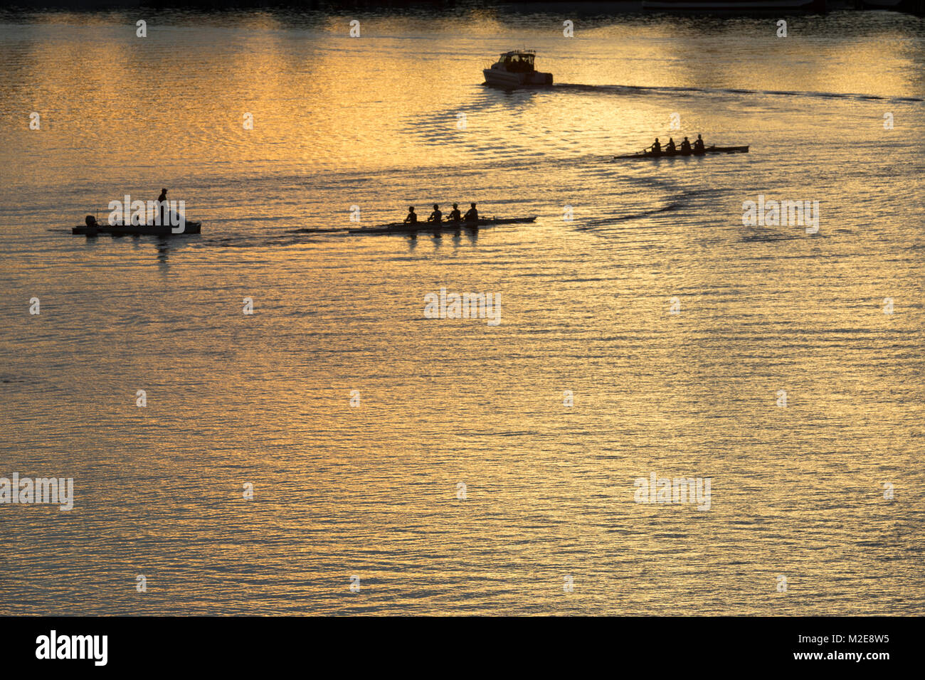 United States, Washington, Seattle, Rowing schells on Lake Union with coach in powerboat following - Stock Image