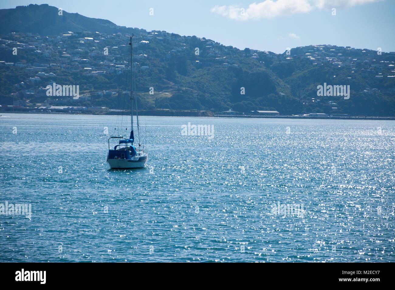 Yacht On Wellington Harbour - Stock Image
