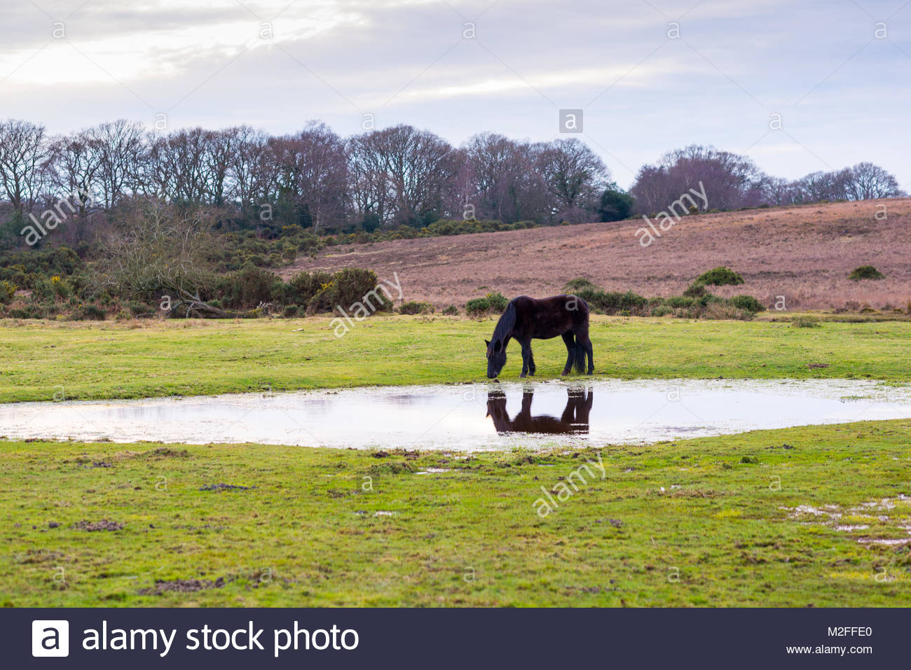 Ditchend Brook, Godshill, New Forest, Hampshire, 7th February 2018. Calm and serene weather conditions late afternoon - Stock Image