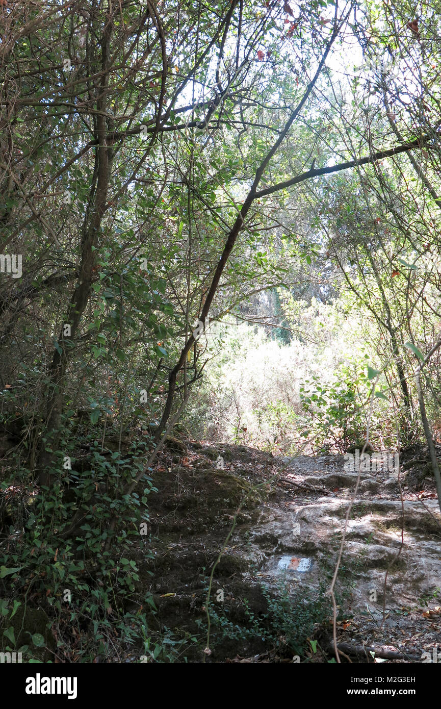 Hiking trail in the Galilee, Israel passing through a dense Mediterranean forest - Stock Image