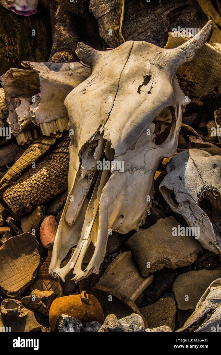 Bull Skull Stock Photos Amp Bull Skull Stock Images Alamy