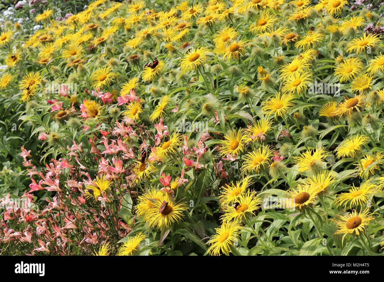 Flowers, plants, ornamental features in Pitmedden Garden, near Ellon, Aberdeenshire, Scotland UK - Stock Image
