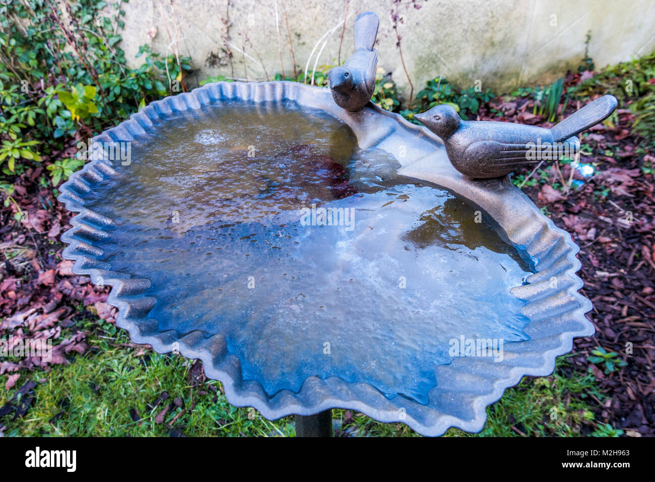 A shell-shaped ornamental bird bath, with a pair of birds on the edge, and the water frozen over in winter. Outside - Stock Image