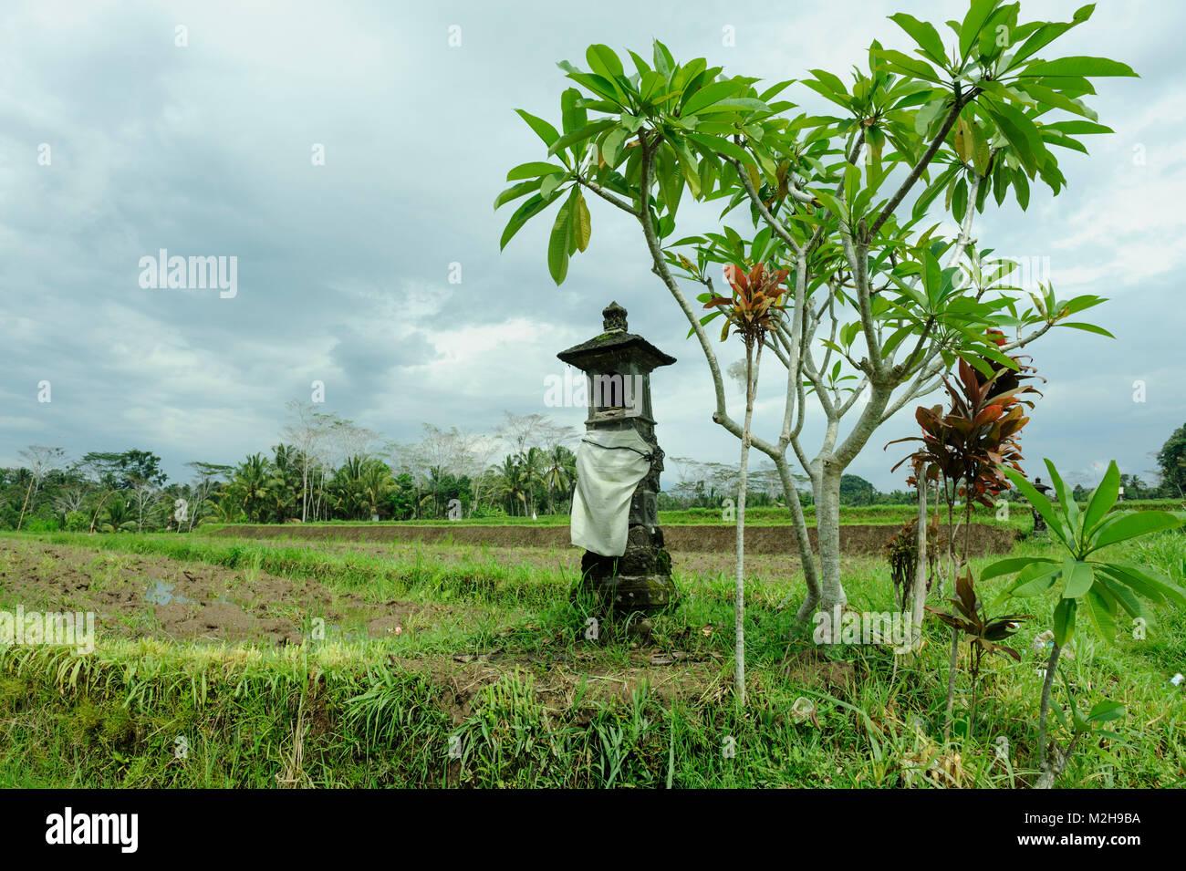 Small shrine or Sanggah Ulun Carik in rice fields near Ubud, Bali, Indonesia Stock Photo