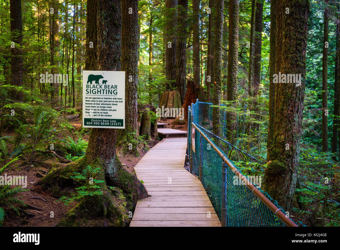 Black Bear Sighting  warning sign - Stock Image