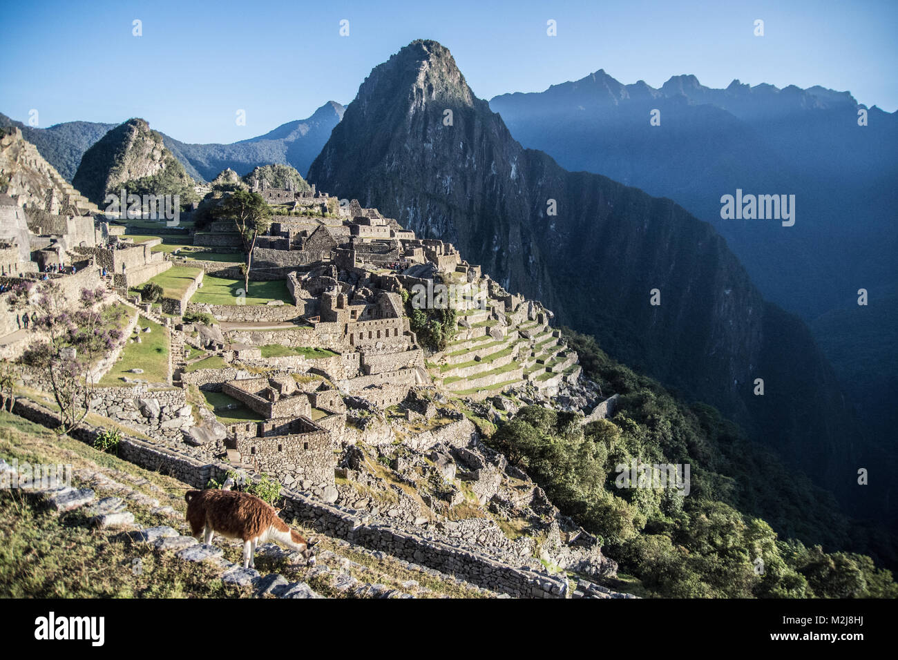 Morning in Machu Picchu - Stock Image