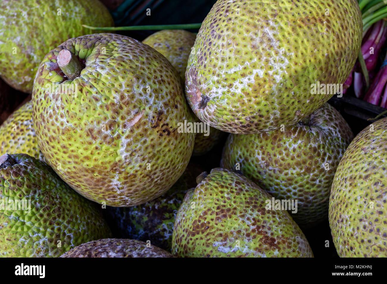 Jamaican breadfruit food photograph - Stock Image