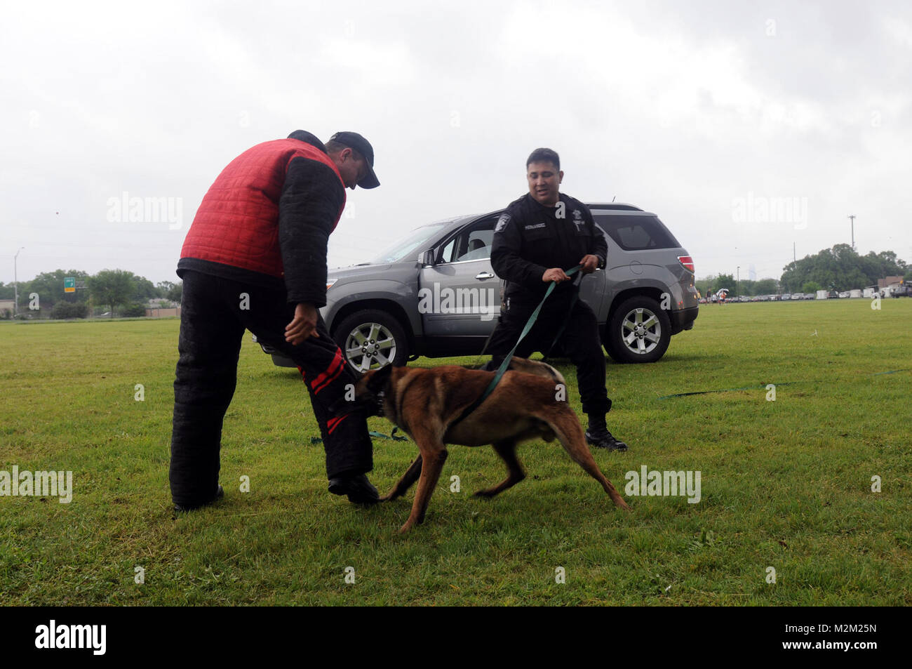 Miletonde, a German Shepherd, subdues this tricky suspect as Travis County Deputy Gilbert A. Hernandez gives commands. - Stock Image