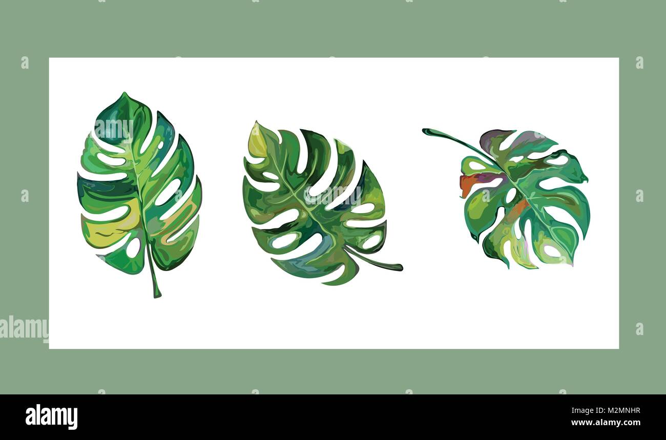 Vector Set Of Tropical Leaves Three Different Types Of Mostera Stock Vector Image Art Alamy Tropical houseplants can bring color and exotic flair to your home even if you live in a colder climate. https www alamy com stock photo vector set of tropical leaves three different types of mostera deliciosa 173788995 html