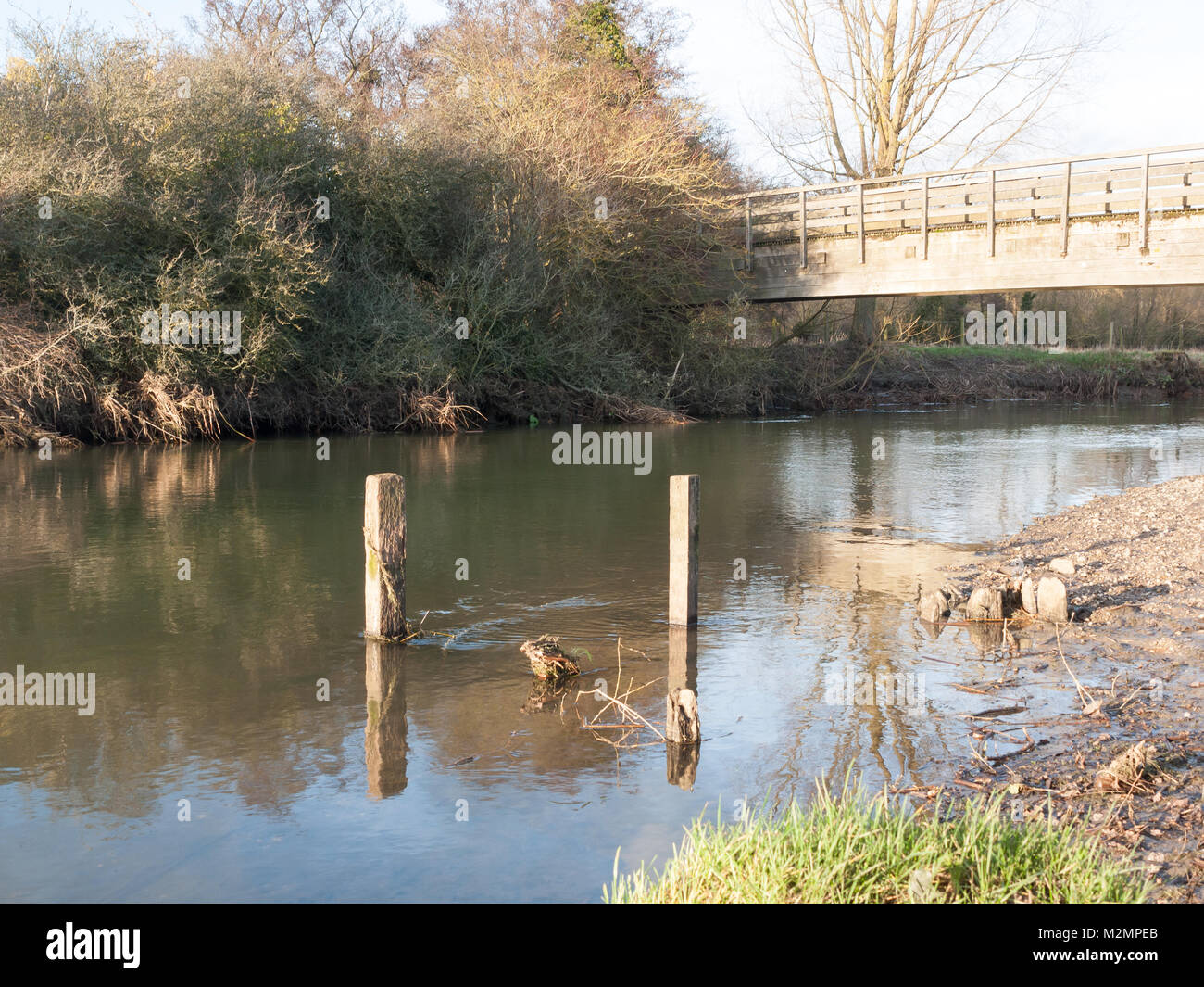 old dead wood stumps standing in river lake water landscape; essex; england; uk Stock Photo