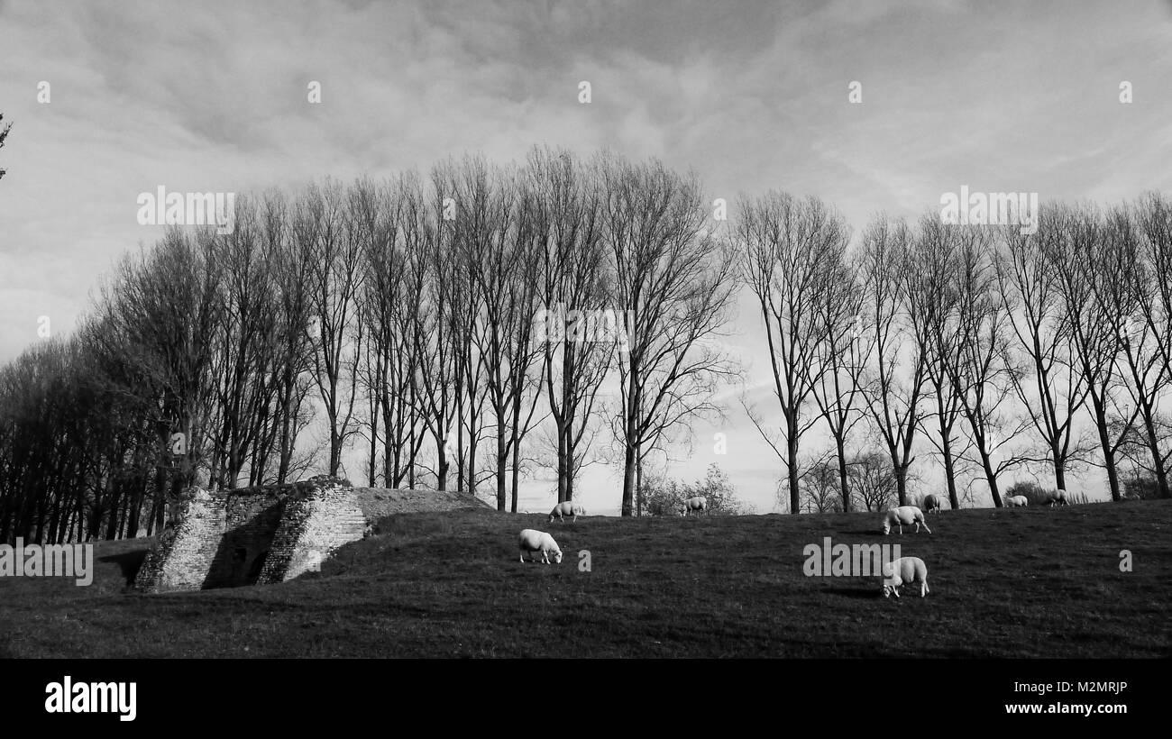 Boudevijinkanaal, Brugs district, Western Flanders, Belgium - Stock Image