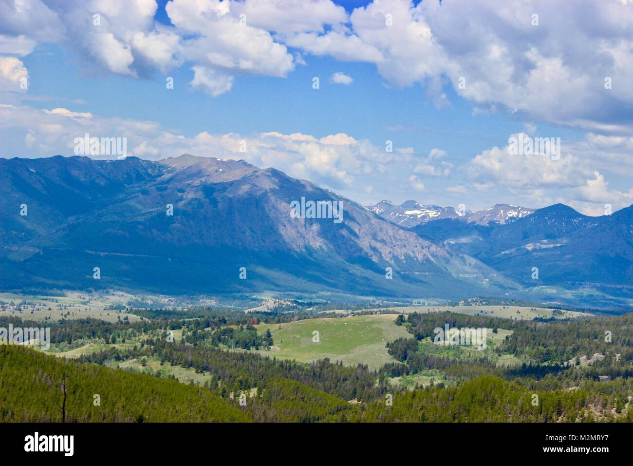 Custer Gallatiine National Forrest - Stock Image